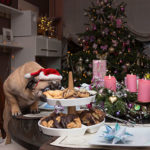 Five Christmas treats your dog must NOT eat