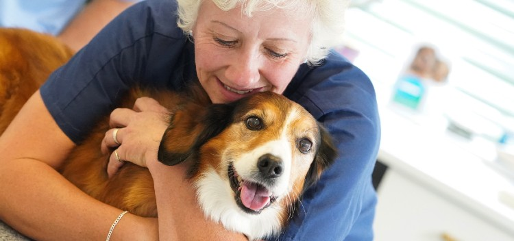 Comprehensive Vet Services for Poole