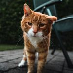 Warning signs of illness in older cats