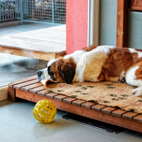 Ten questions every dog owner should ask their kennels.