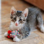 Walton Lodge Veterinary Surgery's top tips for cat toys & Christmas gifts