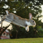Kate shares 7 wild ways to exercise your rabbit