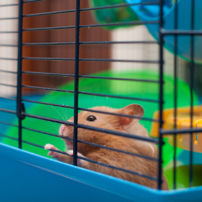 Walton Lodge Veterinary Surgery's nurses share cleaning tips for hutches & cages