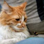 8 bee sting first aid tips for cat owners in Dorset