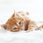 Kitten care advice from the team at Walton Lodge Veterinary Surgery