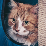 How to find the right cat sitter in Dorset