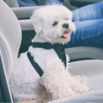 Kate's 10 steps to treating car sickness in dogs