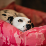 How long dogs are pregnant and tell-tale symptoms