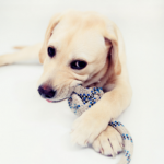 Puppy chewing – your questions answered