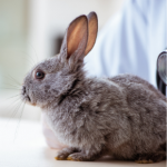 Kate Morawska advises what to look out in your rabbit pre-winter